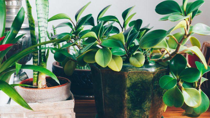 Kako zalivati biljke?